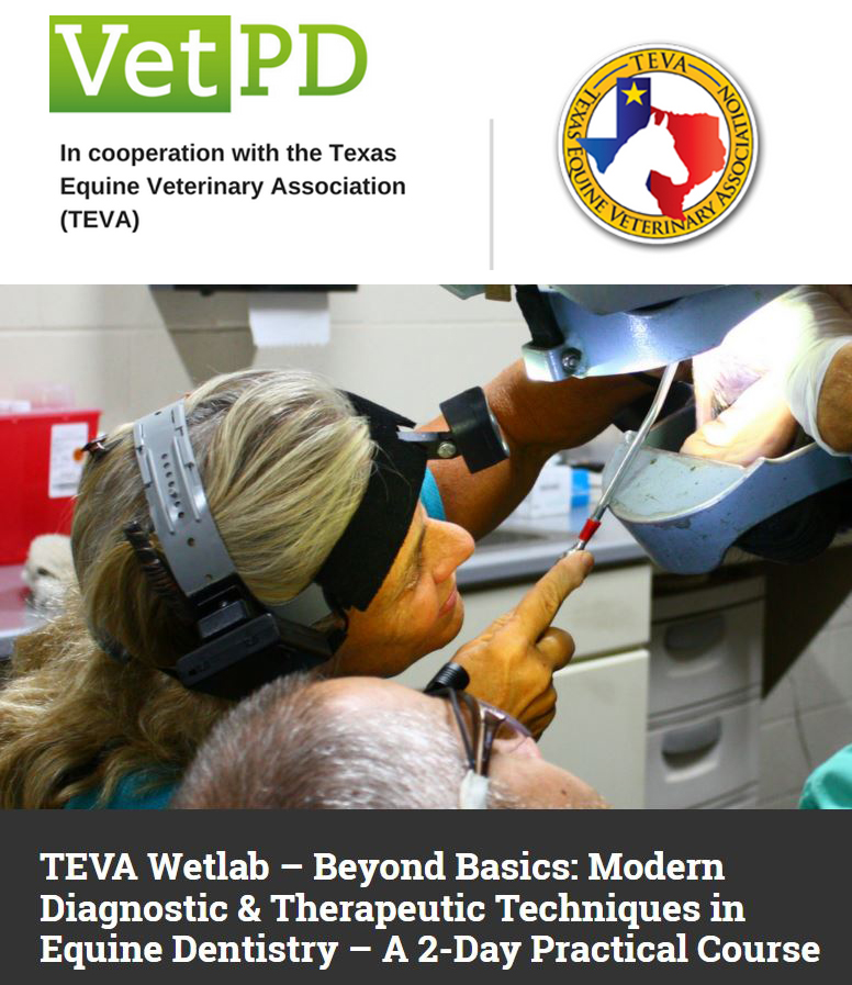 TEVA Wetlab – Beyond Basics: Modern Diagnostic & Therapeutic Techniques in Equine Dentistry – A 2-Day Practical Course